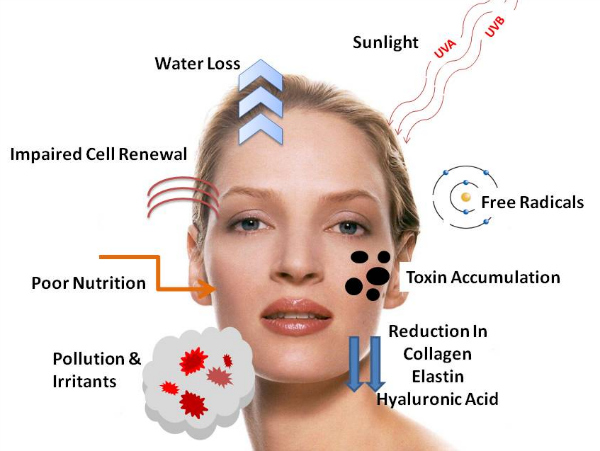 Skin Care Wrinkles Anti Aging Solutions Include Wrinkle Treatments