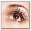Beautiful Curly Lashes